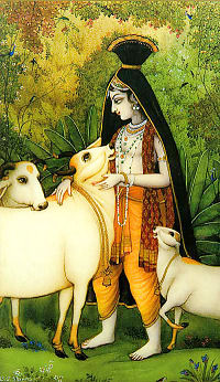 Krishna loves Cows