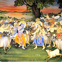 Krishna Balaram herding the cows