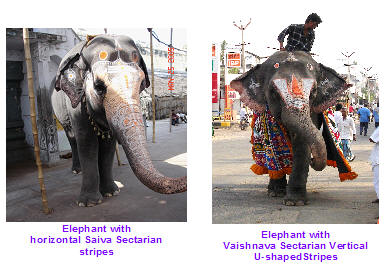Tilaka on Elephant